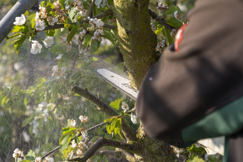 Cherry Grower - Farmers and Growers - Loes Heerink photo series