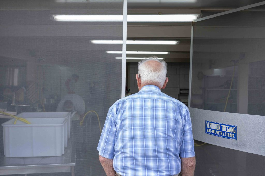 An elderly man looking how mozzarella is made.