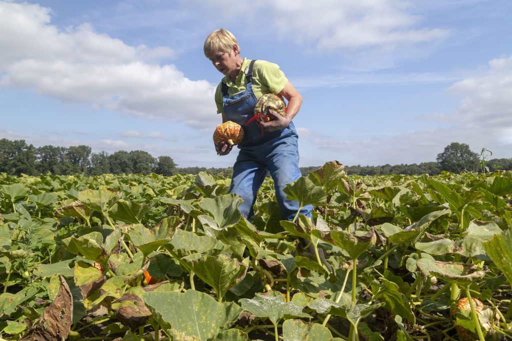 Pumpkin grower - framers and growers - Loes Heerink