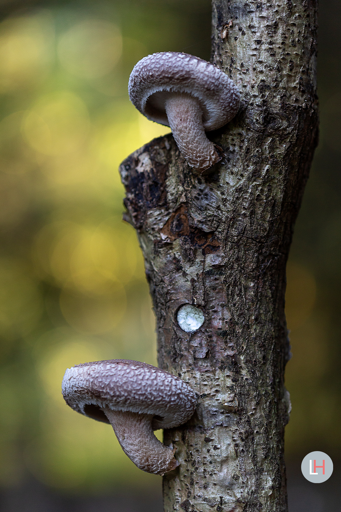 Shiitake Grower Photo serie Loes Heerink