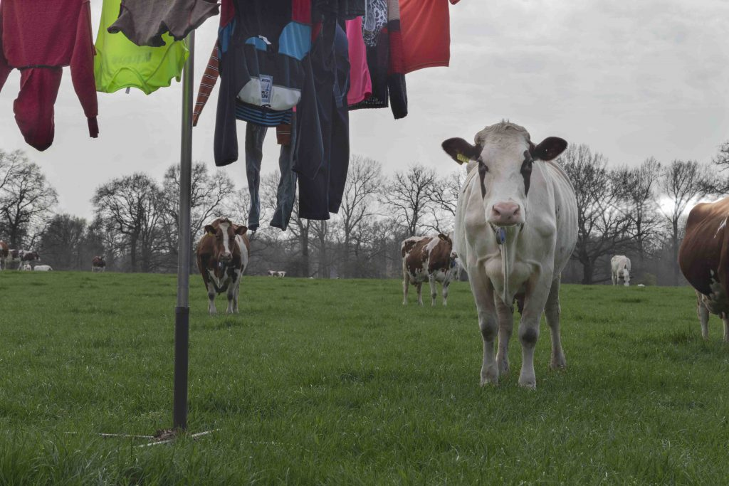 Photo series Laundry Lines by Loes Heerink. Laundry lines in a field with cows